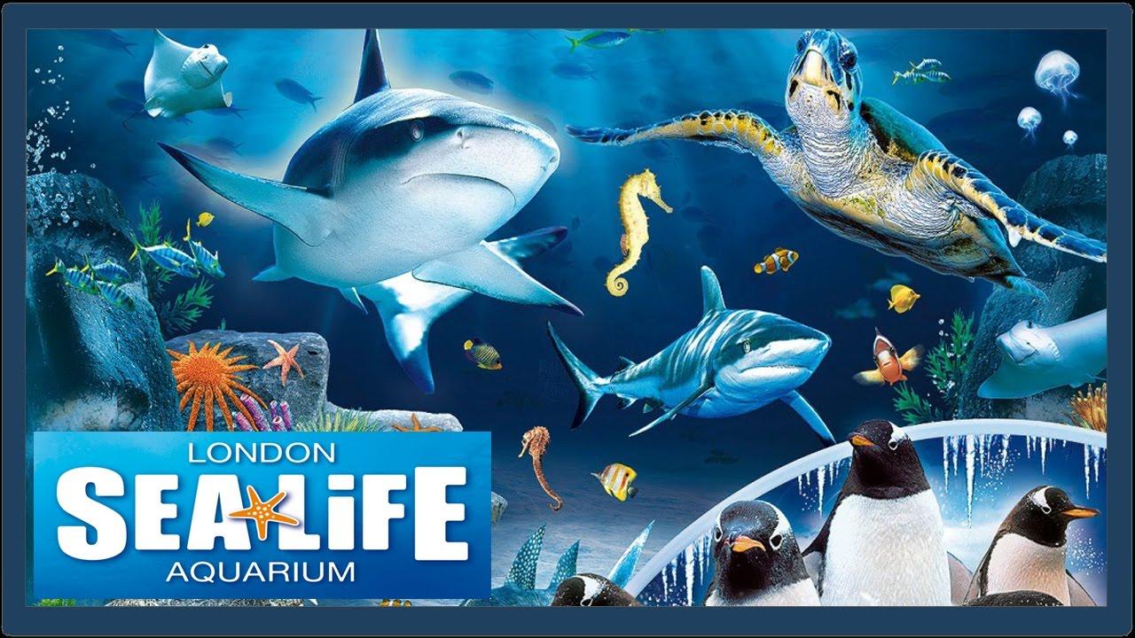 A trip to The London Sealife Aquarium